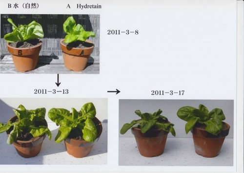 H_Test -  Pot Plants