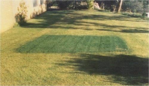 H_Test - Lawn